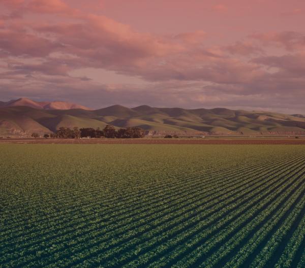 Agroindustriales e ingenios azucareros