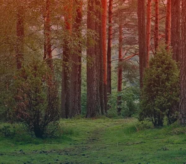 Forestal e Acerraderos